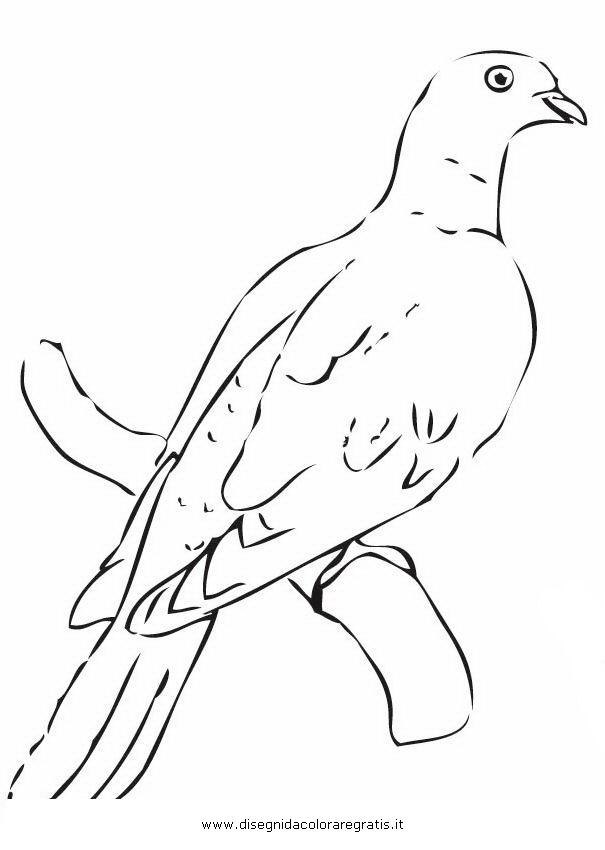 animali/uccelli/piccione_colombo_05.JPG