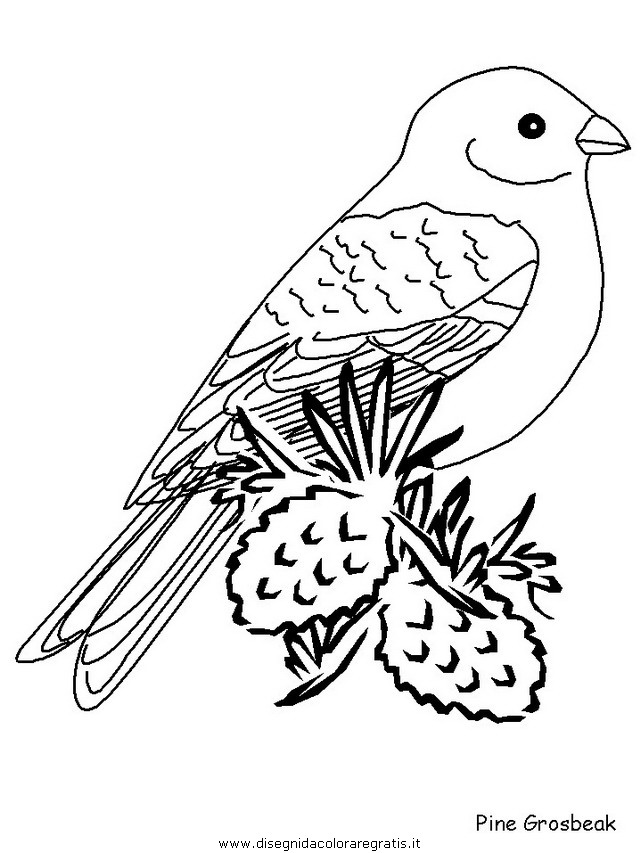 animali/uccelli/pinegrosbeak.JPG