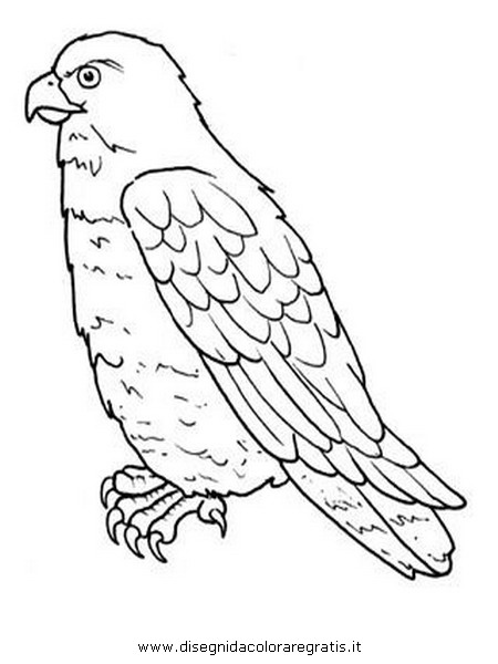 animali/uccelli/poiana.JPG