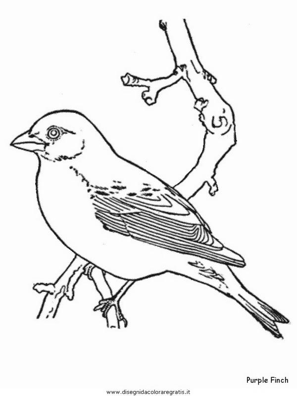 animali/uccelli/purplefinch.JPG