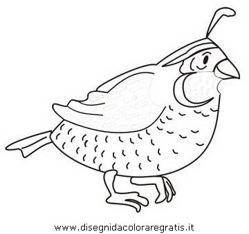 animali/uccelli/quaglia_01.JPG