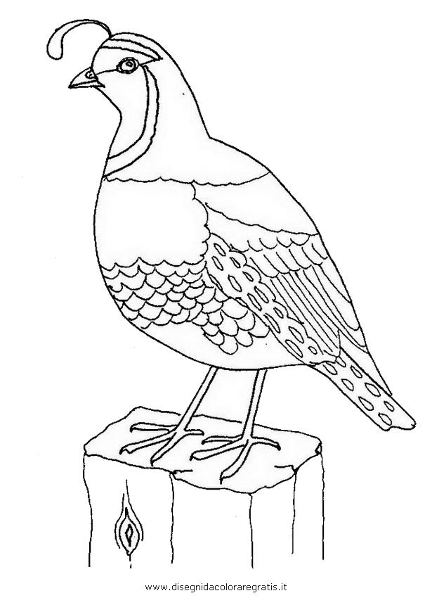 animali/uccelli/quaglia_02.JPG