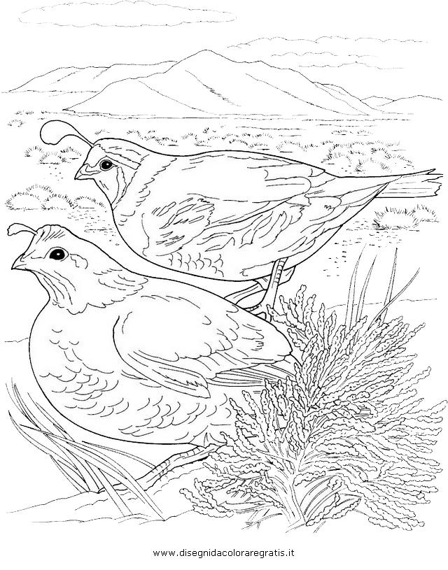 animali/uccelli/quaglia_05.JPG