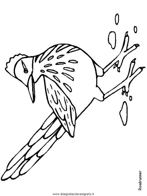 animali/uccelli/roadrunner.JPG