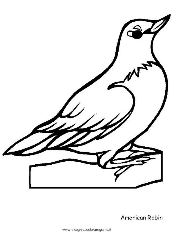 animali/uccelli/robin.JPG
