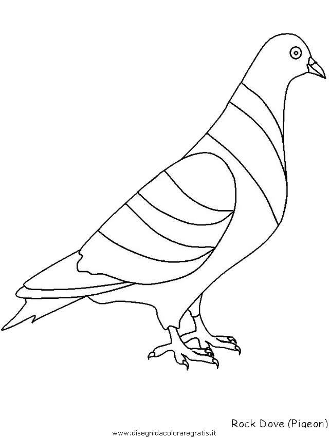 animali/uccelli/rockdove.JPG
