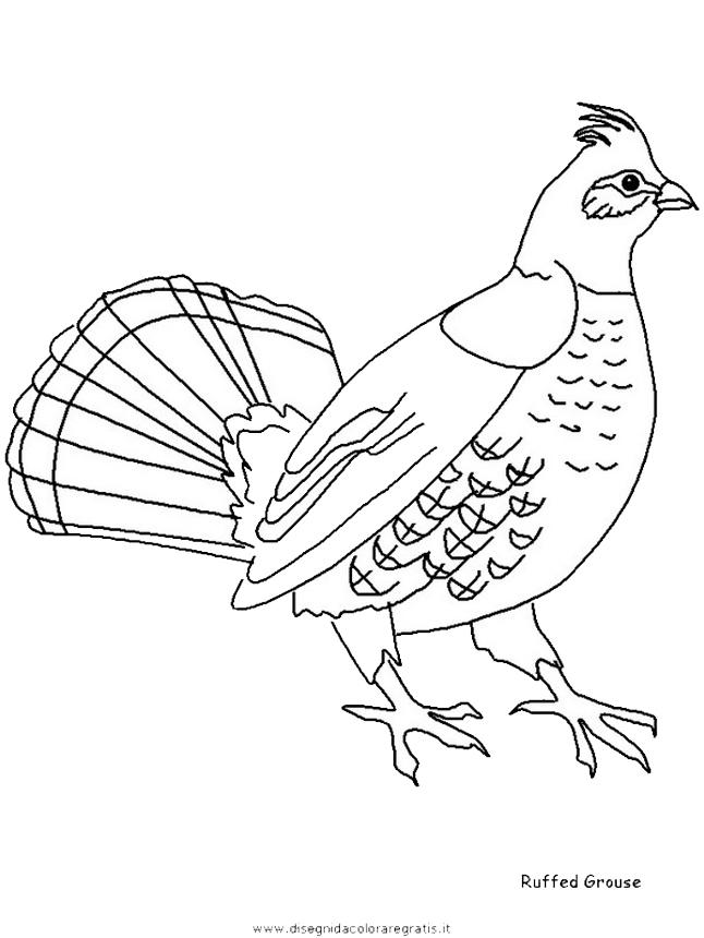 animali/uccelli/ruffedgrouse.JPG