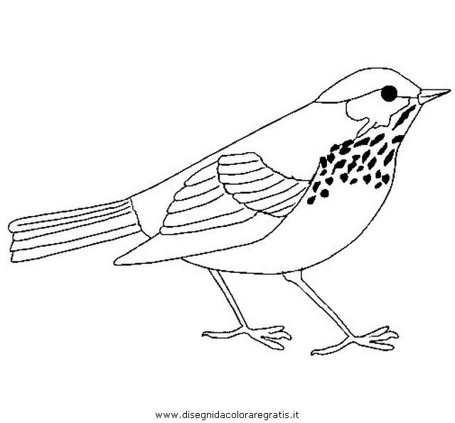 animali/uccelli/tordo_tordi.JPG