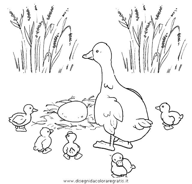 animali/uccelli/uccelli_005.JPG