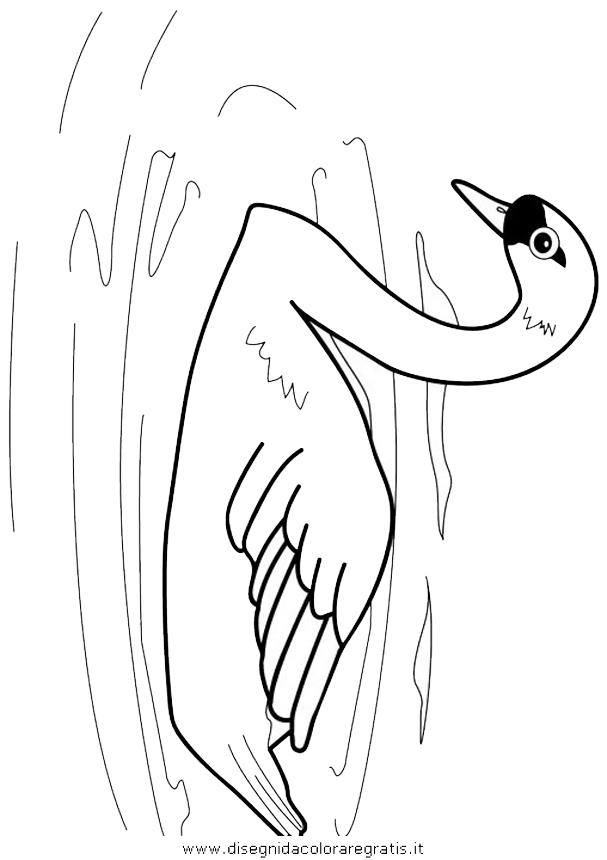 animali/uccelli/uccelli_012.JPG