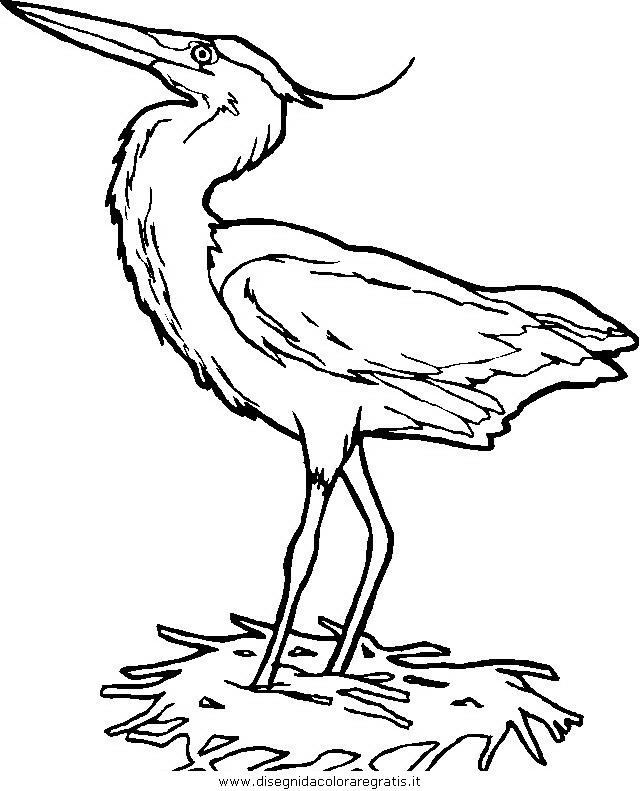 animali/uccelli/uccelli_015.JPG