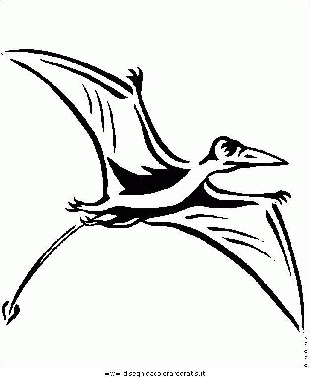 animali/uccelli/uccelli_016.JPG