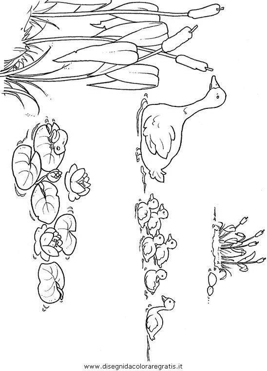 animali/uccelli/uccelli_028.JPG
