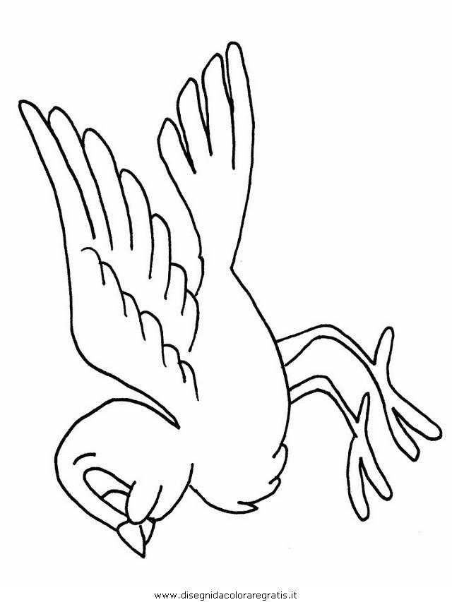 animali/uccelli/uccelli_03.JPG
