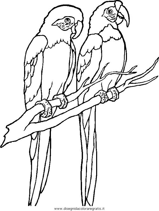 animali/uccelli/uccelli_031.JPG
