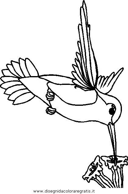 animali/uccelli/uccelli_033.JPG