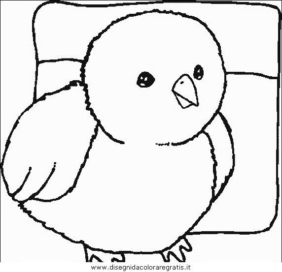 animali/uccelli/uccelli_044.JPG