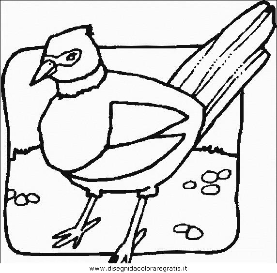 animali/uccelli/uccelli_060.JPG