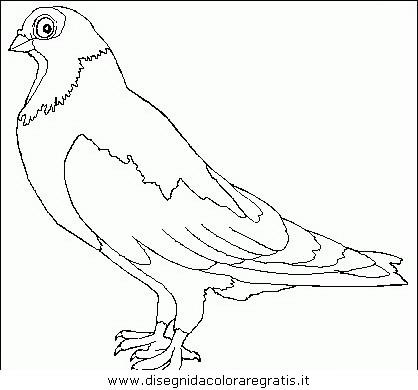 animali/uccelli/uccelli_075.JPG