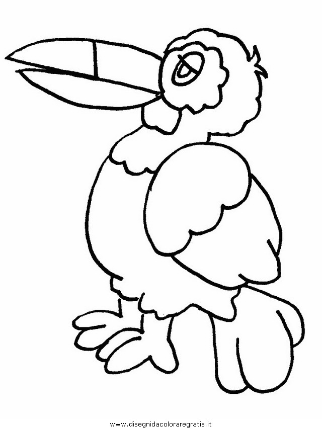 animali/uccelli/uccelli_08.JPG