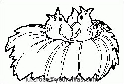 animali/uccelli/uccelli_088.JPG