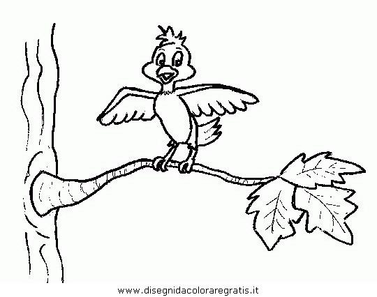 animali/uccelli/uccelli_095.JPG