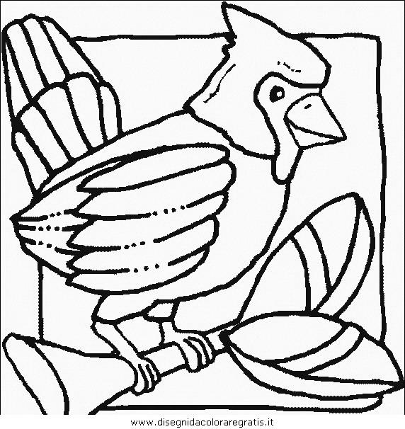 animali/uccelli/uccelli_102.JPG