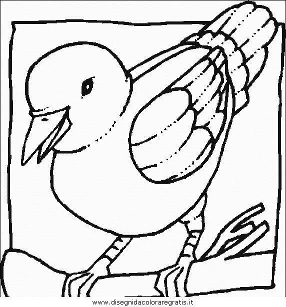 animali/uccelli/uccelli_110.JPG