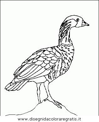 animali/uccelli/uccelli_119.JPG