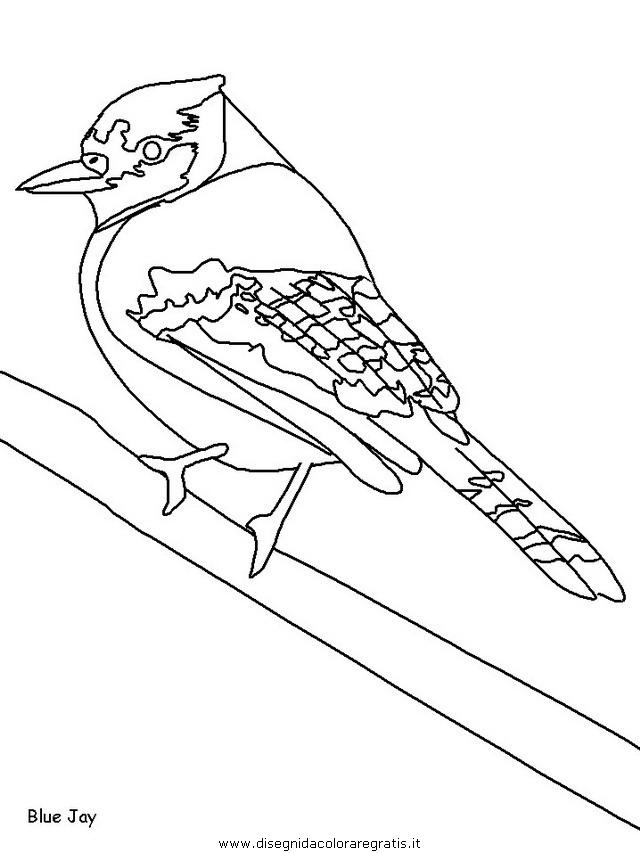 animali/uccelli/uccelli_12.JPG