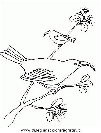 animali/uccelli/uccelli_120.JPG