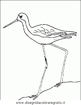 animali/uccelli/uccelli_121.JPG