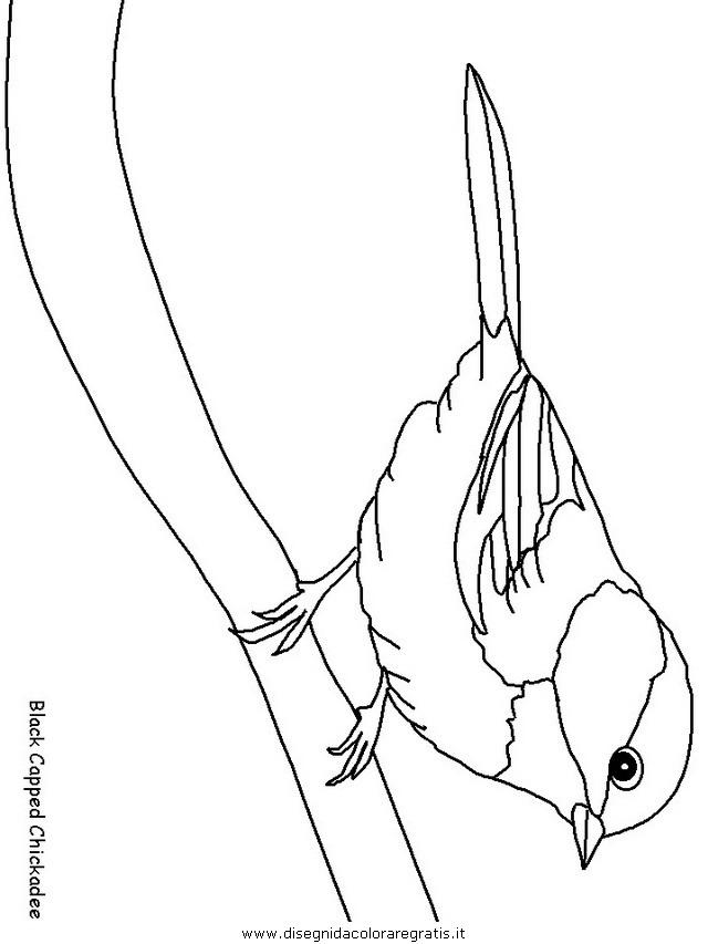 animali/uccelli/uccelli_13.JPG