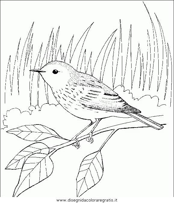animali/uccelli/uccelli_135.JPG