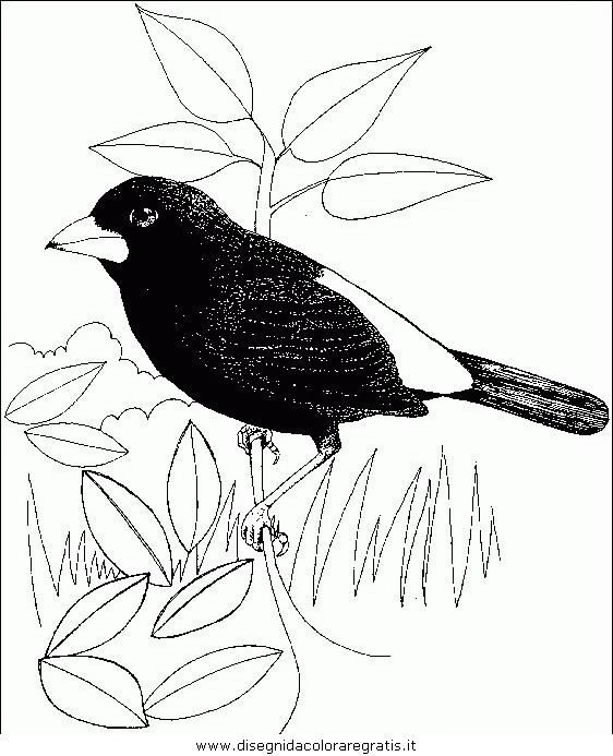 animali/uccelli/uccelli_136.JPG