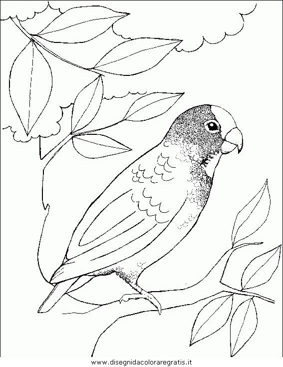 animali/uccelli/uccelli_140.JPG