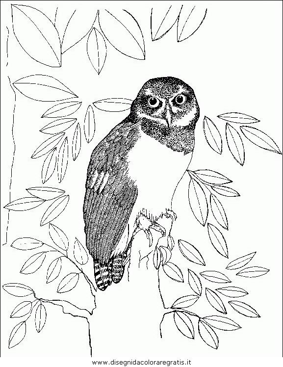 animali/uccelli/uccelli_142.JPG
