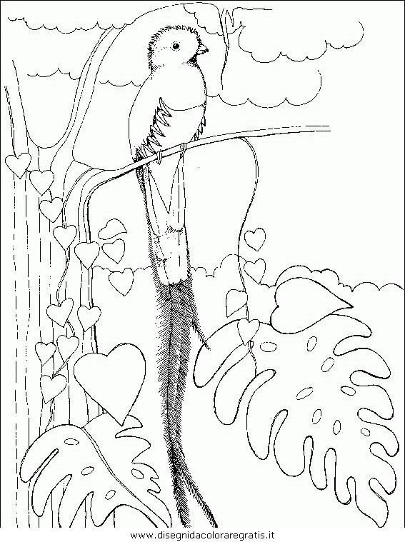 animali/uccelli/uccelli_143.JPG