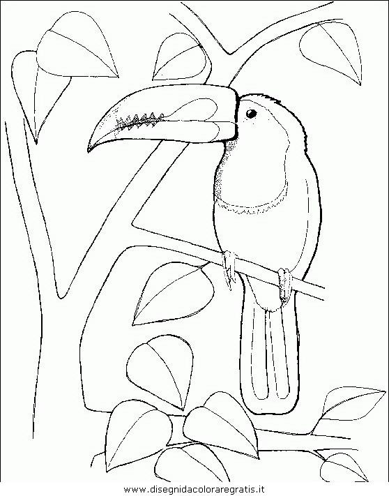 animali/uccelli/uccelli_144.JPG