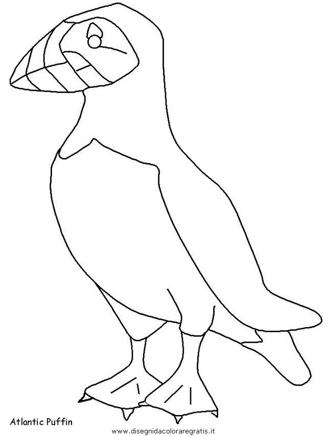 animali/uccelli/uccelli_15.JPG