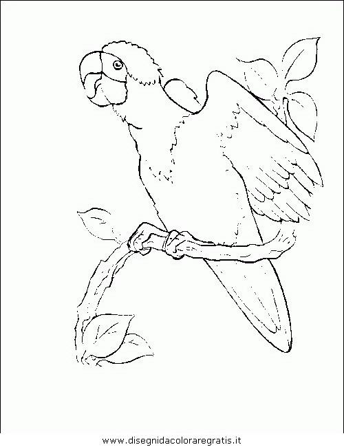 animali/uccelli/uccelli_172.JPG
