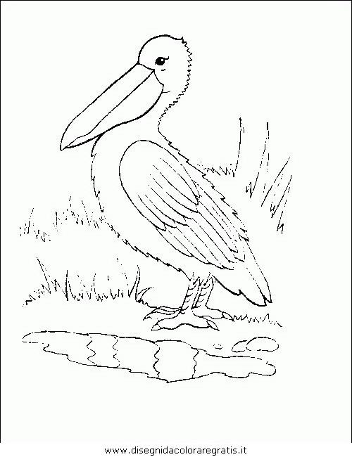 animali/uccelli/uccelli_173.JPG