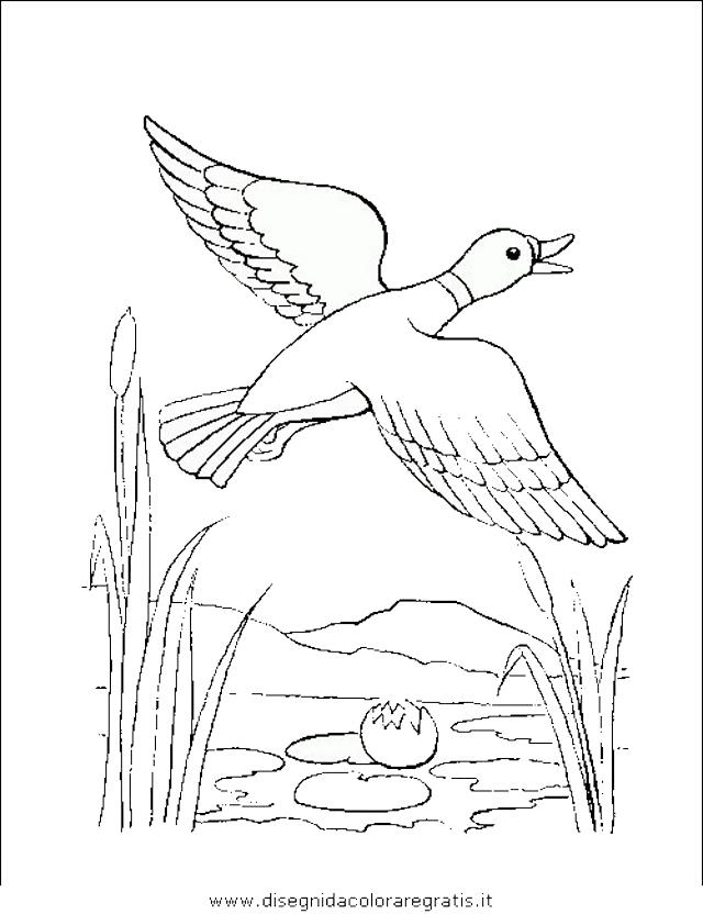 animali/uccelli/uccelli_174.JPG