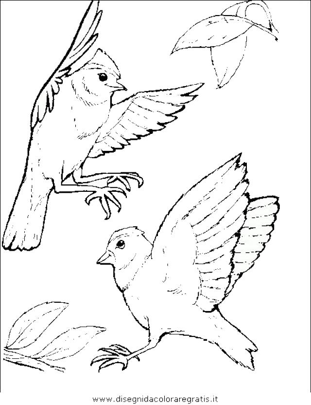 Disegno uccelli 175 animali da colorare - Semplici disegni di uccelli ...