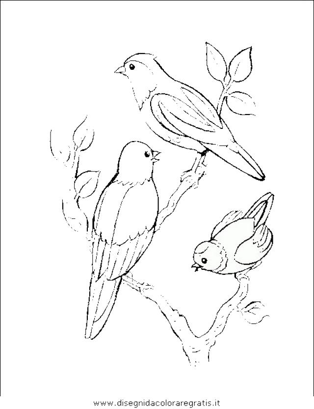 animali/uccelli/uccelli_176.JPG