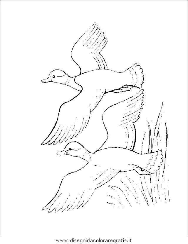 animali/uccelli/uccelli_177.JPG