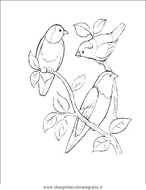 animali/uccelli/uccelli_178.JPG