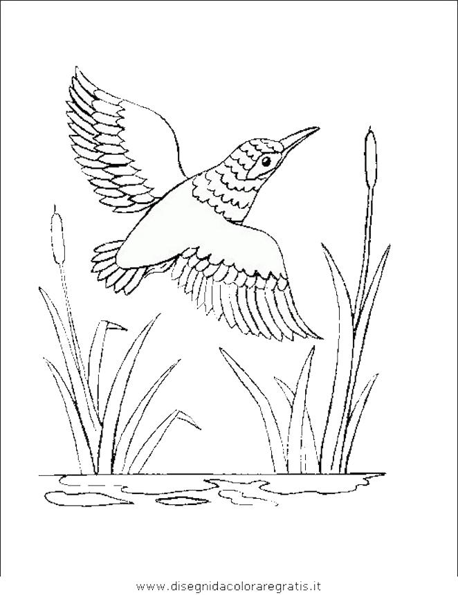 animali/uccelli/uccelli_179.JPG