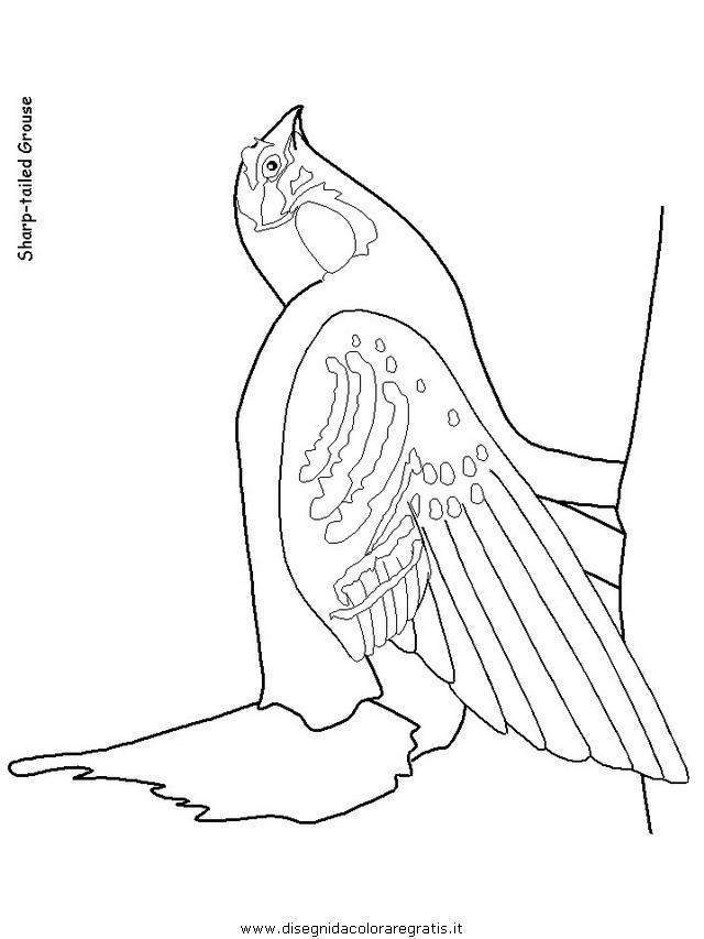 animali/uccelli/uccelli_18.JPG