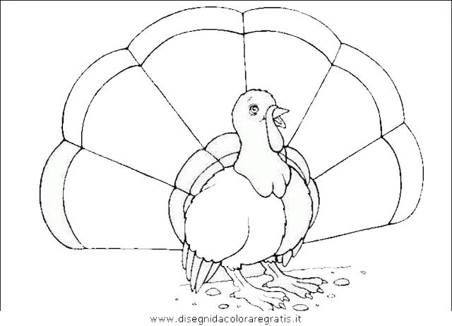 animali/uccelli/uccelli_186.JPG